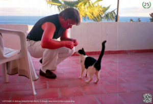 Die Katze des Botschafters ► eine erotische Erzählung von Gerhard-Stefan Neumann ►
